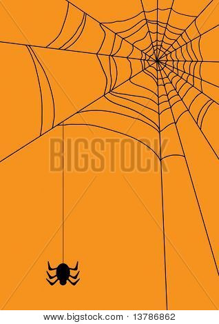 Vector illustration of spiders web