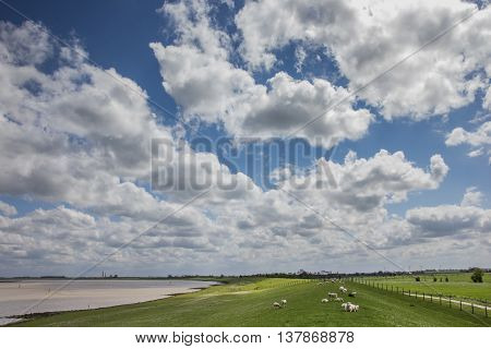 Sheep on a dike along the dollard route Germany