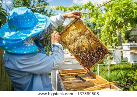 The beekeeper opens the hive, the bees checks, checks honey. Beekeeper exploring honeycomb.