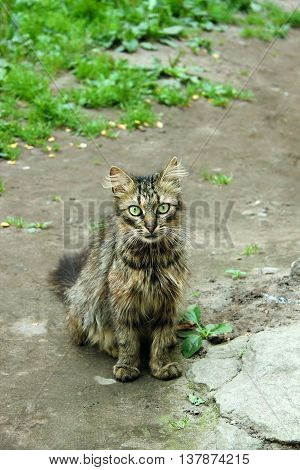 Thin shaggy gray cat looking for a home