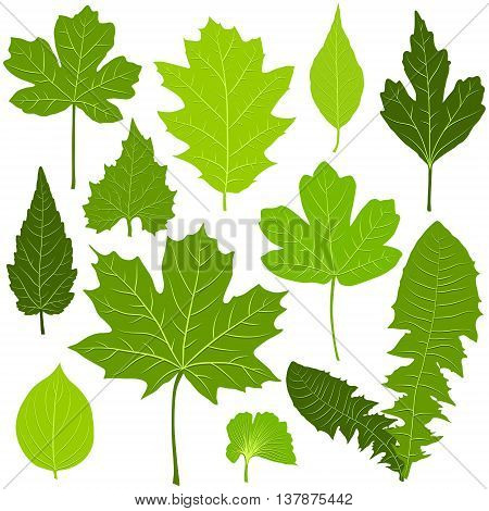 Green leaves set on white background vector