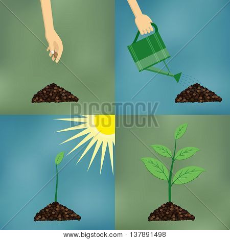 How to grow tree from the seed in the garden easy step by step. Design of garden elements.