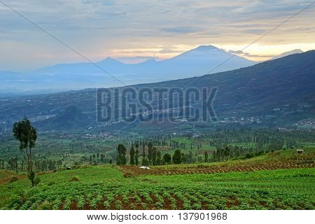 Picture of green farmland with mountain view at West Java Indonesia.