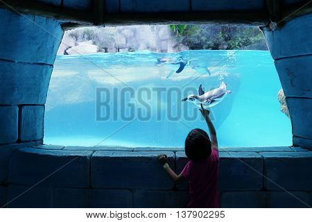 Silhouette of little girl watching penguin swimming inside an aquarium