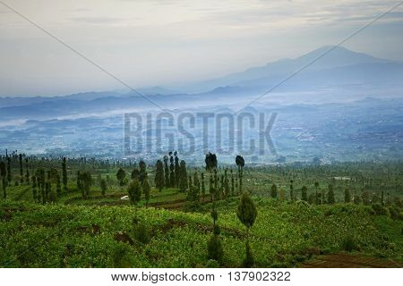 Picture of green farmland with mountain panorama in the morning at West Java Indonesia.