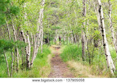 Jesup Path in Acadia National Park, Mt. Desert Island Maine.