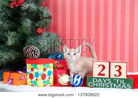 Orange tabby kitten coming out of a stocking next to a christmas tree with colorful presents and holiday balls of ornaments next to Days until Christmas light beech wood blocks 23 days til