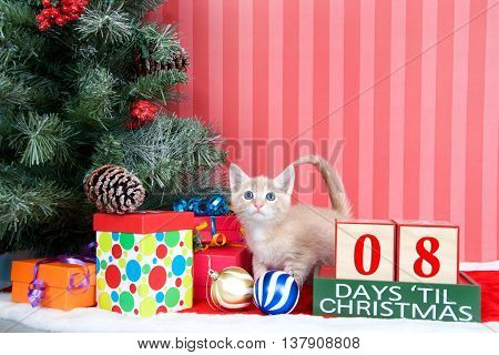 Orange tabby kitten coming out of a stocking next to a christmas tree with colorful presents and holiday balls of ornaments next to Days until Christmas light beech wood blocks 08 days til