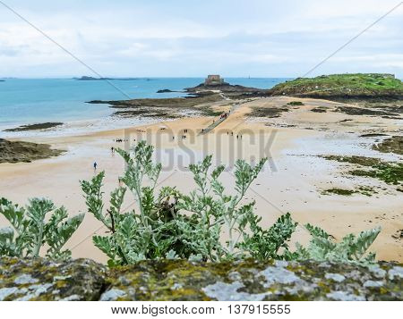 Wild plants on rocks in outflow and seacoast Saint Malo. Brittany, France. Selective focus