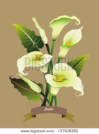 Calla flowers bouquet isolated on beige. Vector