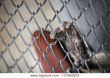 Abstract of imprison from close focus on monkey's hand touching iron cage