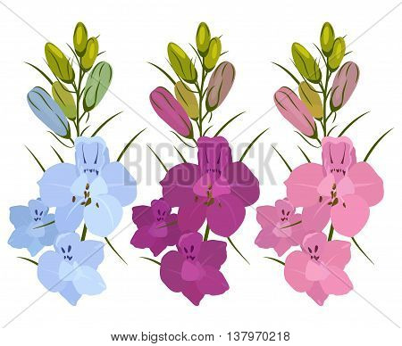 Set of three flowers. Blue, purple and crimson. Delphinium flowers. On a white background.