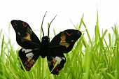 Black butterfly in the grass on a white background poster