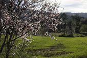 Naturaleza campo flores almendros hierba libertad lluvia poster