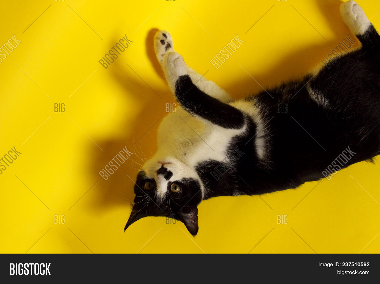 Black Cat On Yellow Image Photo Free Trial Bigstock