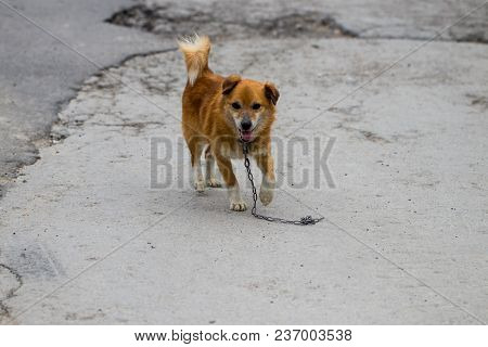 A Stray Dog Standing In The Middle Of A Highway.