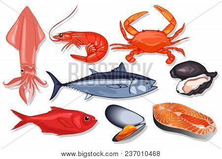 Different Kind Of Fresh Seafood. Vector Mussel, Fish Salmon, Shrimp, Squid, Craps, Mollusk, Oyster,