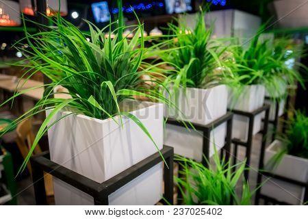 Yucca, House Plant In A Pot. White Square Pot. Modern Interior Design. Landscaping Of Public Institu