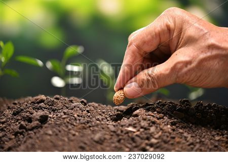 Hand Of Farmer Planting A Seed In Soil