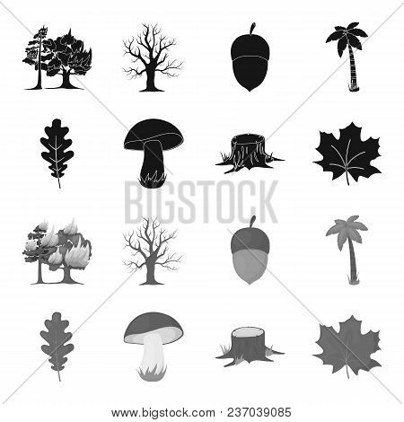 Oak Leaf, Mushroom, Stump, Maple Leaf.forest Set Collection Icons In Black, Monochrome Style Vector