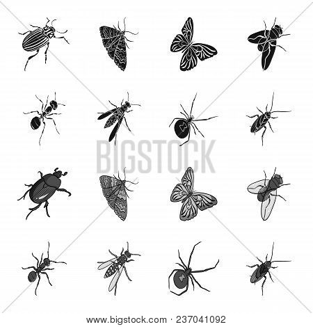 An Insect Arthropod, An Osa, A Spider, A Cockroach. Insects Set Collection Icons In Black, Monochrom