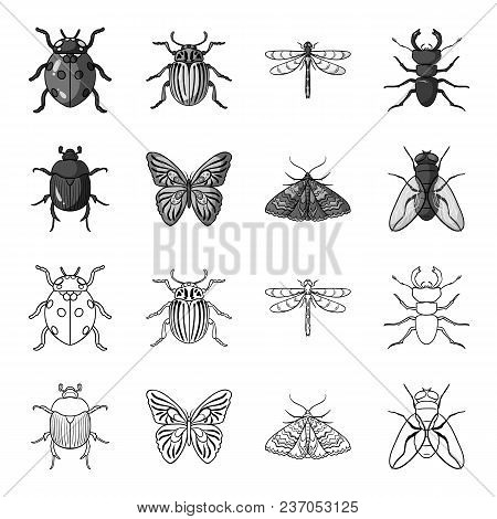 Wrecker, Parasite, Nature, Butterfly .insects Set Collection Icons In Outline, Monochrome Style Vect