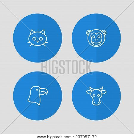 Set Of 4 Animal Icons Line Style Set. Collection Of Tomcat, Kine, Aquila And Other Elements.