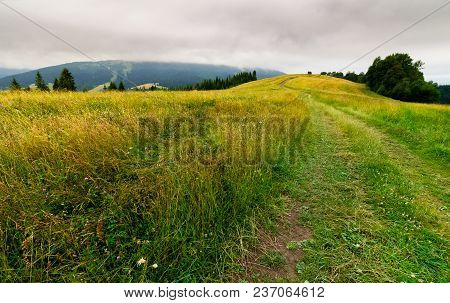 Country Road Through Grassy Fields In Mountains. Lovely Summer Countryside On Overcast Day