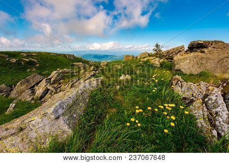 Dandelions Among The Rocks In Carpathian Alps. Heavy Cloud On A Blue Sky Over The Mountain Peak In T