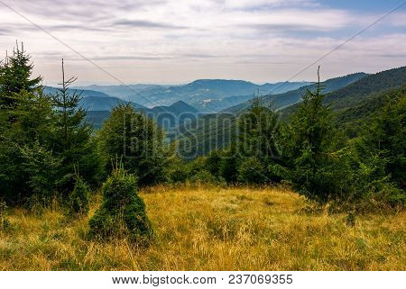 Forest On A Grassy Meadow In Mountains In Evening. Lovely Summer Landscape With Krasna Mountain Ridg