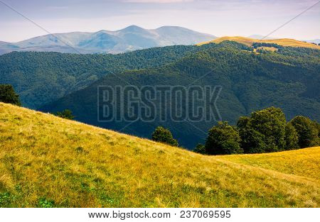 Grassy Meadow On Hillside Of Carpathians. Beautiful Summer Landscape With Svydovets Mountain Ridge I