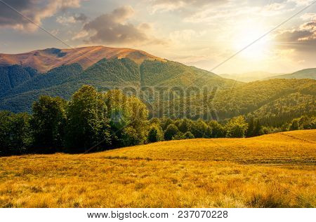 Beech Forest Near Apetska Mountain At Sunset. Lovely Summer Landscape Of Carpathian Mountains