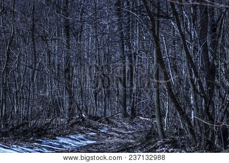 The Path Turns Into The Wilderness Of The Mysterious Night Forest Exciting Wildlife Is Pure And No O