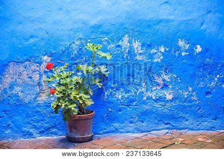 Blue Painted Wall And Flower In The Clay Pot.