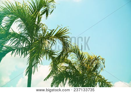 Coco Palm Tree Cinematic Toned Photo. Tropical Vacation Destination Place. Exotic Island Holiday. Tr