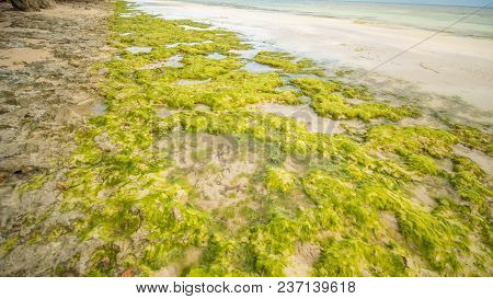 Flowering Algae On The Coast Of The Island Of Bohol. Philippines. Evening Time. Shooting In Motion