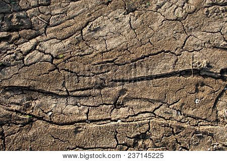 Land With Dry And Cracked Ground. Beautiful Texture.
