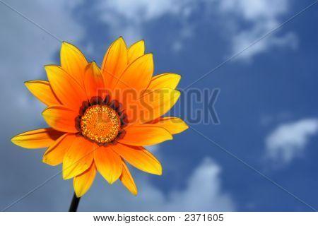 O Flower