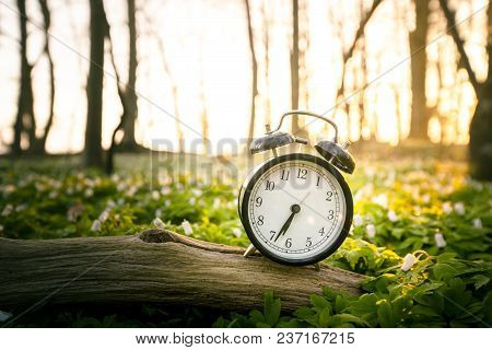 Alarm Clock On A Wooden Branch In A Forest In The Sunrise With Anemone Flowers All Around In The Spr