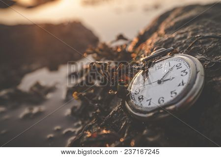 Old Clock On A Rock By The Ocean In The Summer Sunrise Covered With Seaweed