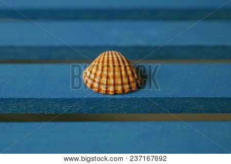 Close Up View Of Seashell On Blue Wooden Background. Summertime Concept. Macro View Of Seashell Text