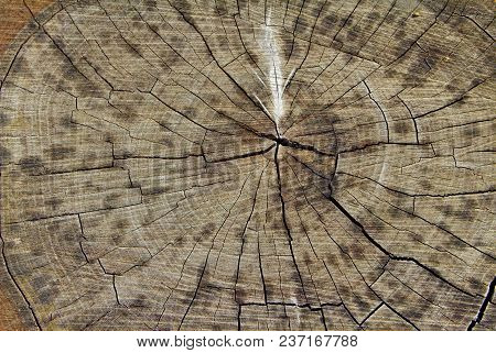 Photo Of An Old Stump Covered With Cracks From Time To Time