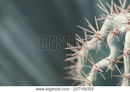 Carnegiea Cactus. Background With Desert Cactus. Thorns On Succulent Plant. Green Color