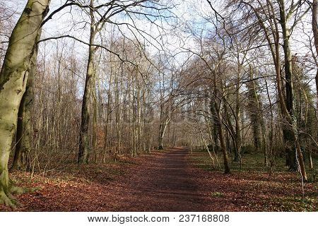 English Woodland In Winter With Bare Trees