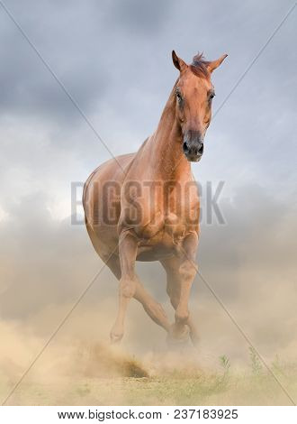 Beautiful Chestnut Horse, Running In The Field, Front View