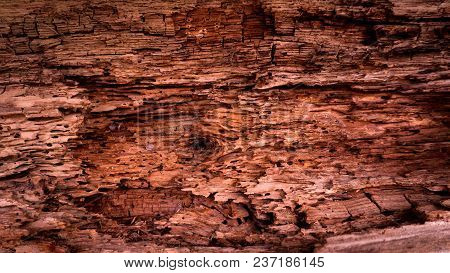 Wooden Dark Background Eaten By Termites Old Weathered Wooden Surface With Termites Holes In It