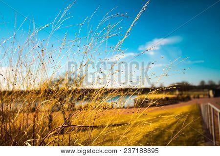Beautiful Golden Grass Landscape At Park Taken At Libertyville Illinois Usa