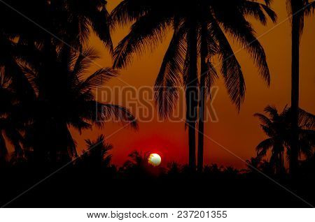 Silhouette Coconut Palm Trees On Beach With Sunset.