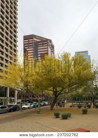 Phoenix, Az, Usa - April 16, 2018: Palo Verde Or Parkinsonia Aculeata Tree Golden Crone With Bloomin