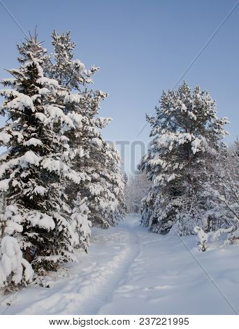 Path In The Forest In The Winter Time. Plenty Of Snow.